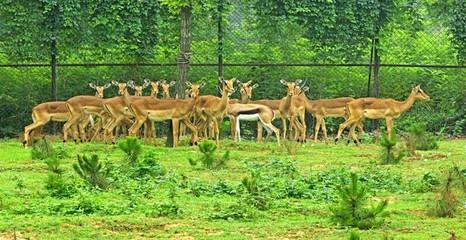 野生动物园一隅